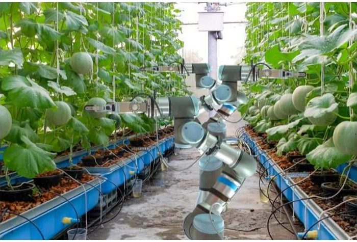 Digital Transformation In Agriculture: 4 Ways AI Will be Involved